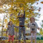 Hanmer autumn leaves