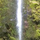 dog stream waterfall hanmer springs