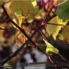 terrace edge wines waipara New Zealand