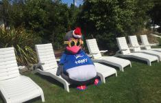 Toppy the penguin relaxing in the sun at Hanmer TOP 10