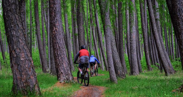 mountainbiking in Hanmer forest