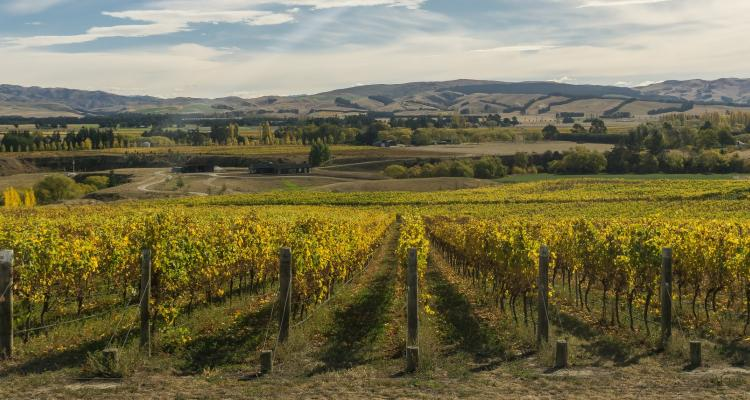 Waipara Valley New Zealand Alpine Pacific Triangle, Sandra Vallaure